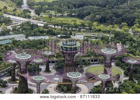 Supertree Grove At Gardens By The Bay In Singapore