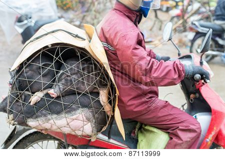 Transport Vietnamese style