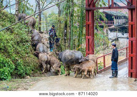 Rural scene in Sapa, Vietnam