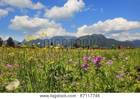 Idyllic Rural Landscape With Spring Flowers Meadow