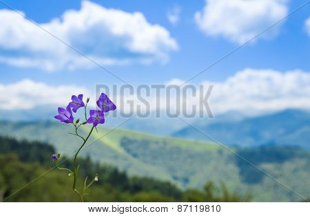 Purple Bluebell Flower With A Backdrop Of The Pyrenees