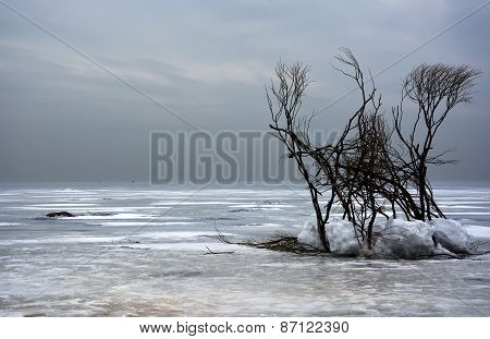 Winter Landscape With Trees. Frozen Sea, Moody Sky