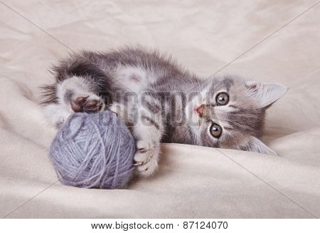 playful  kitten with gray ball