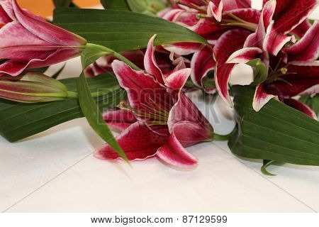 Asian Lilies