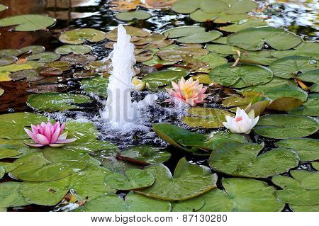 Lily pond with fountain
