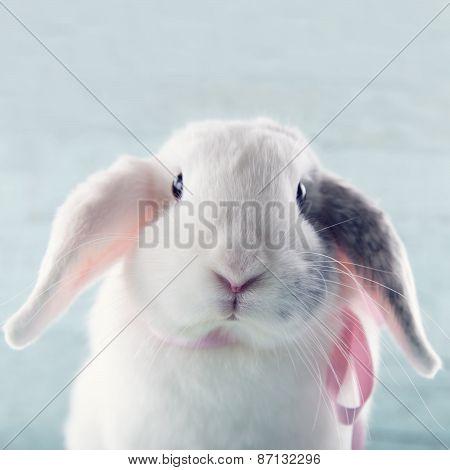 White Soft Bunny Rabbit