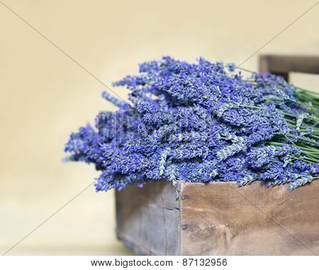 Bouquet Of Lavender Flowers