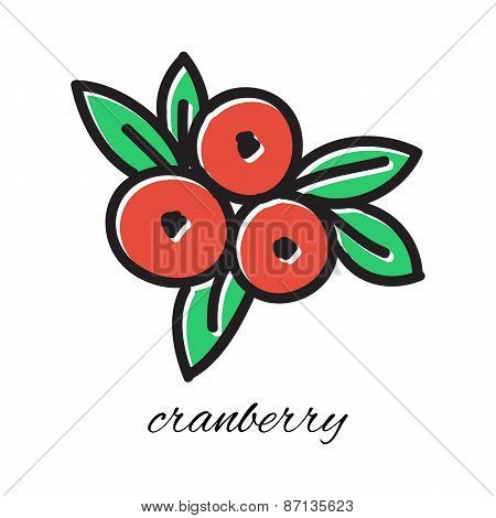 Hand drawn cranberry in doodle style. Vector illustration.