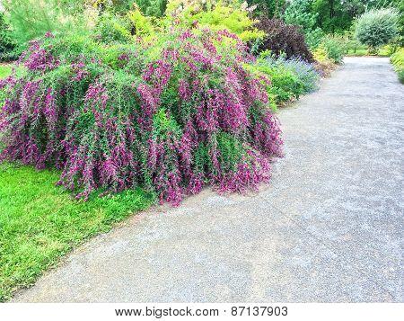 Beautiful Blooming Plants In Summer Garden