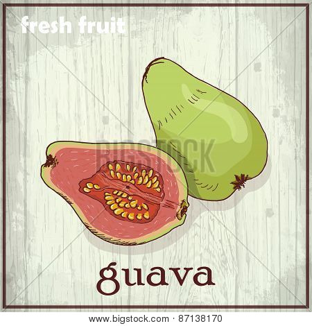 Hand Drawing Illustration Of Guava. Fresh Fruit Sketch Background