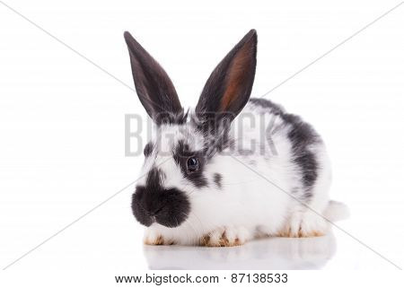 White Rabbit On A White Background.