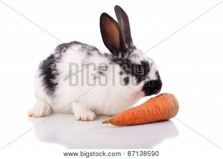 White Rabbit With Carrot On A White Background.;
