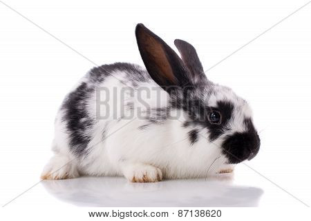 Rabbit On A White Background.