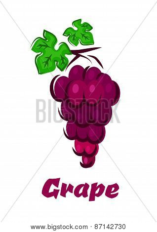 Cartooned grape vine with bunch and leaves