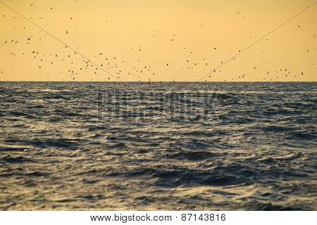 Flock of birds over sea waves at sunset