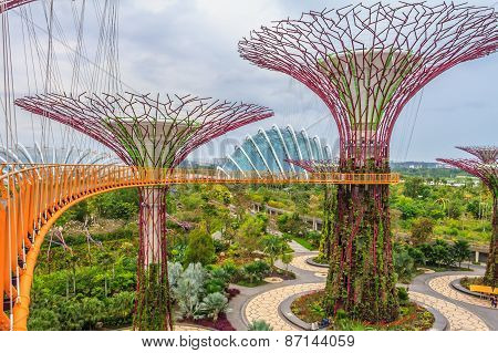 Singapore supertrees Singapore Supertrees at the Gardens By The Bay