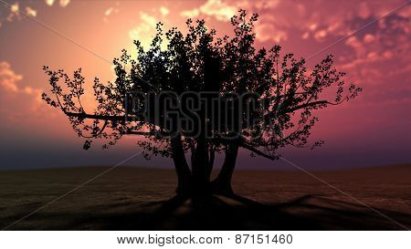 Fabulous Tree Against A Beautiful Sunset