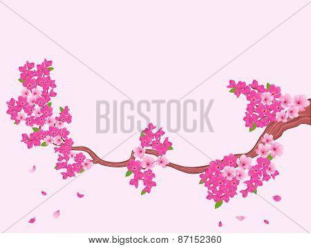 Blooming Sakura Branch Over Light Pink