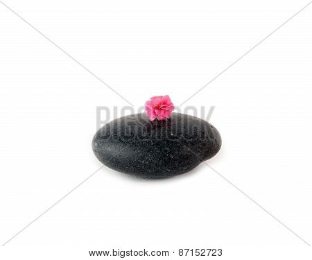 Sleek black stone with pink buds on white