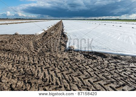 Tire Tracks And Agricultural Plastic Film