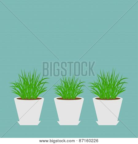 Three Pots With Growing Grass Icon Set Isolated Blue Background Flat Design