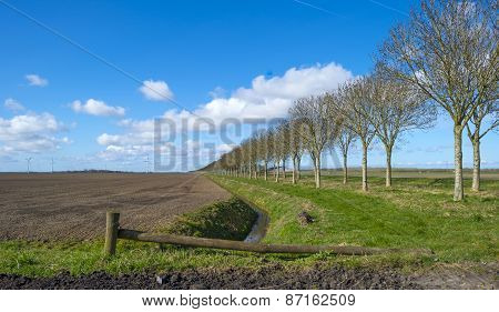 Row of trees along a ditch in spring
