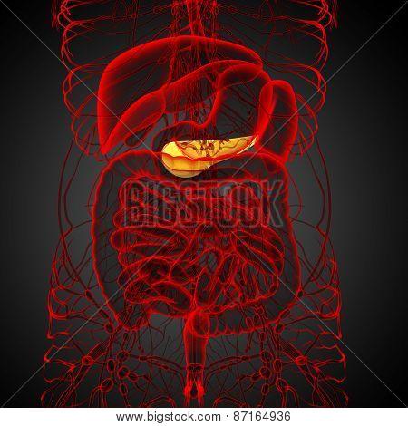 3D Render Medical Illustration Of The  Pancrease