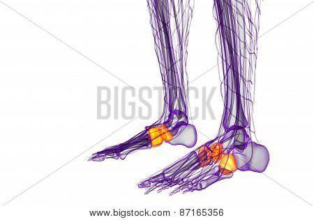 3D Render Medical Illustration Of The Midfoot Bone