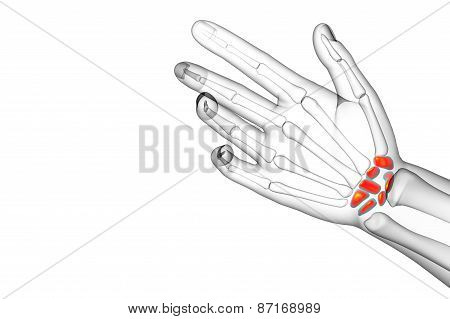 3D Rendered Illustration Of The Human Carpal Bones
