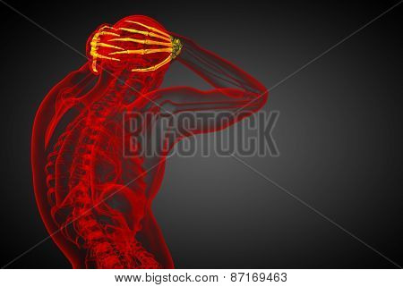 3D Rendered Illustration Of The Human Hand Bones