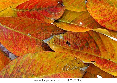 Dry Leaves, Background