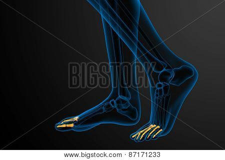 3D Render Medical Illustration Of The Phalanges Foot