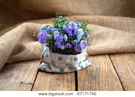 Campanula Terry Flowers In Paper Packaging, On Sackcloth, Wooden Background
