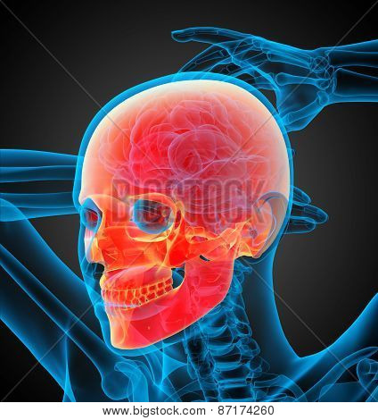 3D Render Illustration Of The Skull