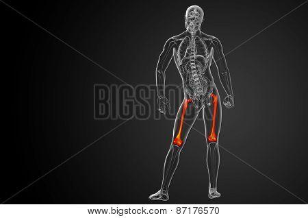 3D Render Medical Illustration Of The Femur Bone