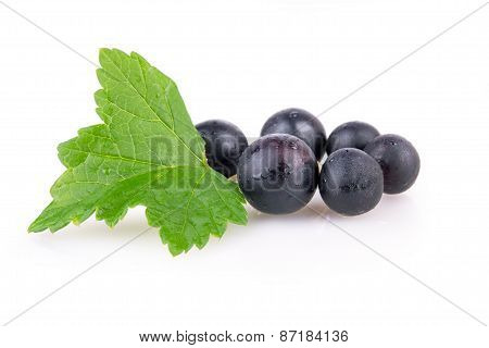 Black Currant Berries With Leaves