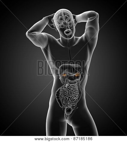 3D Render Medical Illustration Of The Spleen
