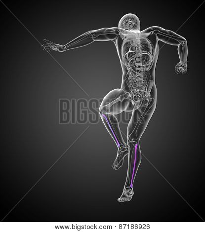 3D Render Medical 3D Illustration Of The Fibula Bone