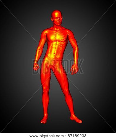 3D Render Illustration Of The Human Anatomy