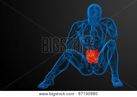 3D Rendered Illustration Of The Small Intestine
