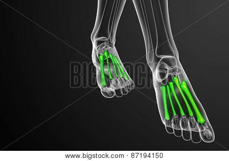 3D Render Medical Illustration Of The Metatarsal Bones
