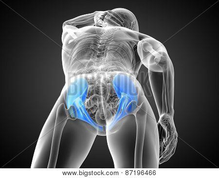 3D Medical Illustration Of The Pelvis Bone