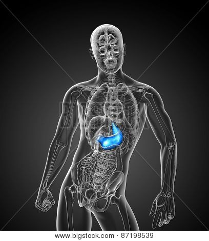 3D Render Medical Illustration Of The Stomach