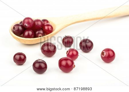 Cranberry In A Spoon
