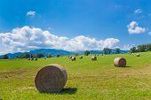 stock photo of hay bale  - Round bales of hay on farmland in Saint - JPG