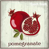 pic of pomegranate  - Hand drawing illustration of pomegranate - JPG