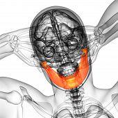 stock photo of jaw-bone  - 3d rendered illustration  - JPG