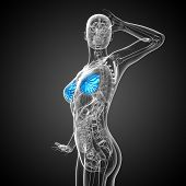 picture of mammography  - 3d render medical illustration of the human breast  - JPG