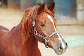 picture of horses eating  - cute horse walks on the ranch - JPG