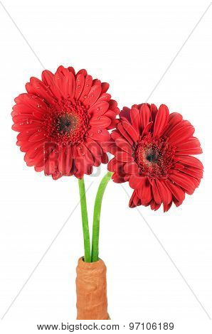 Beautiful Red Gerbera Flowers